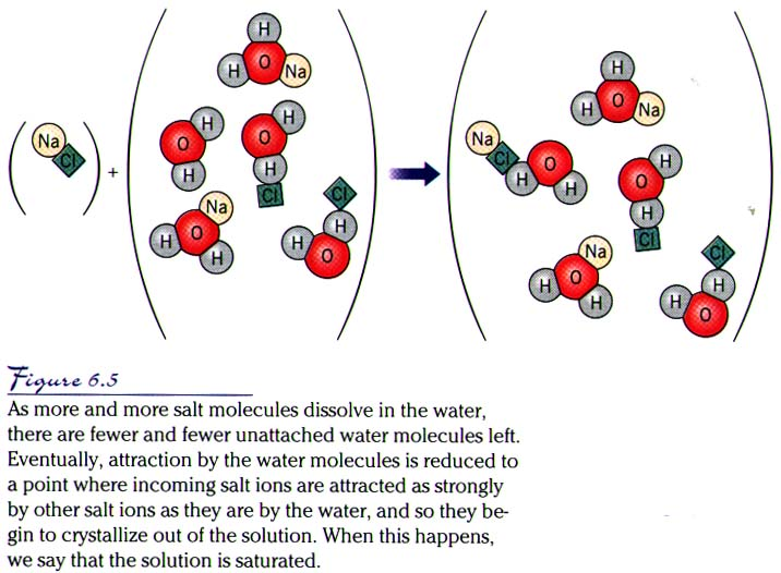 Water, Salt, and the Hydrologic Cycle