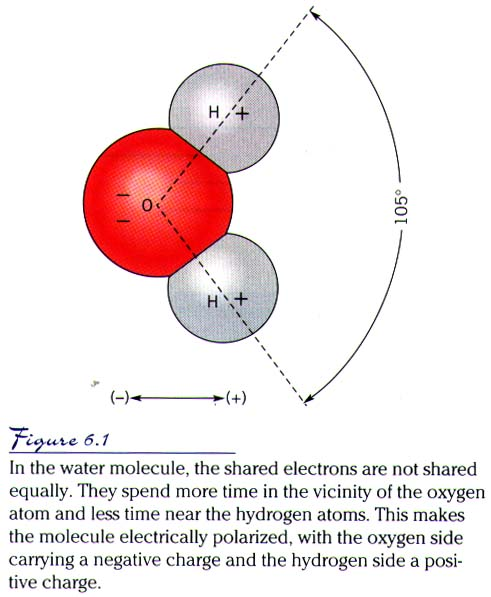 Note That I Said More Or Less Equally Because In Fact The Oxygen Atom Hangs On A Little Tightly To Shared Electrons Remember Have
